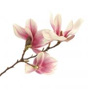 Lynia, Hydrolat z magnolii, 100 g