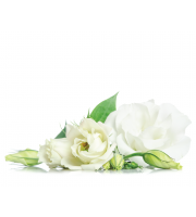 Lynia, Hydrolat z białej róży (Rose Alba) Organic, 100 g