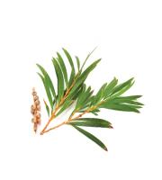 Lynia, Olejek z drzewa herbacianego, 5 g