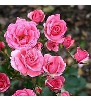 Zrób Sobie Krem, Hydrolat z róży bułgarski, 200 ml